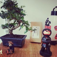 Bonsai e Kokeshi..