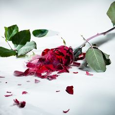 Rose Day Special – When Your Relationship Status is Complicated  No matter whether you are in a relationship or you are single, you can make someone feel special. When it comes to love, we only think about girlfriends/boyfriends, but it is equally fair to be in love with your friend.