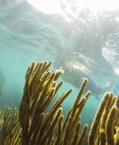 Get a whole new view of the world. #snorkel