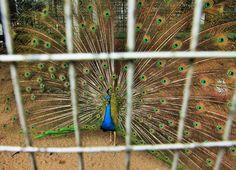 37 Batu Caves, Bird, Animals, Animales, Animaux, Birds, Animal, Animais