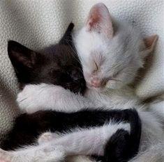 Pretty Animals, Cute Little Animals, Pretty Cats, Cute Cats, Baby Animals, Funny Animals, Baby Cats, Cats And Kittens, Gato Gif