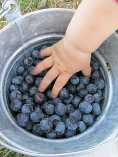 chubby baby hand reaching into bucket of blueberries