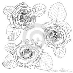 Рука нарисованные розы