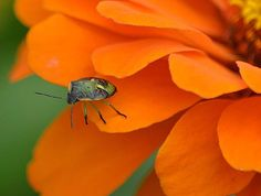 Beetle Looking Off The Edge Photographic Art Print