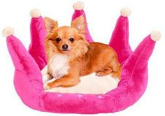 A dog bed fit for a princess!