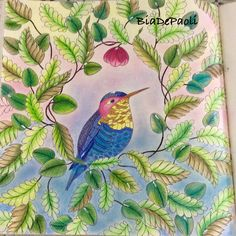 Colouring Coloring Books Tropical Colorful Drawings Animals Animal Kingdom Vintage Pages