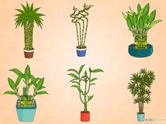 How to Care for an Indoor Bamboo Plant Care for an Indoor Bamboo Plant Step 1 Version Bamboo House Plant, Indoor Bamboo Plant, Bamboo Plant Care, Snake Plant Care, Lucky Bamboo Plants, Indoor Plants, House Plants, Caring For Bamboo Plant, Indoor Gardening