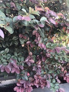 Terrazzo, Plants, Plant, Planets