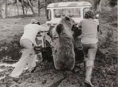 Everyone wants to help a Land Rover!