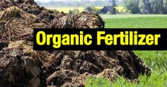 Organic fertilizers high in nitrogen are manure, cotton seed meal, guano, and the by-products of slaughter houses - bone meal, tankage, and dried blood. The best organic sources of phosphoric acid are bone meal and rock phosphates. Potash is found in the ash of hardwood trees and... #fal #spr #sum