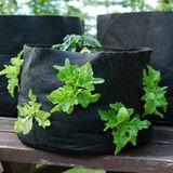 vegetable container garden in Smart Pot