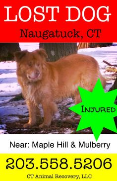 reunied Chance, missing in Naugatuck, CT  %%%Injured%%%%https://www.facebook.com/ctanimalrecoveryLLC/photos/a.320017804838673.1073741837.130430913797364/304634486377005/?type=3&theater