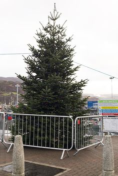 Our Christmas tree was erected this weekend.  30th November 2014