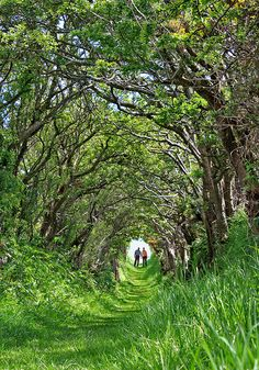 The path to Ballynoe Stone Circle in Northern Ireland
