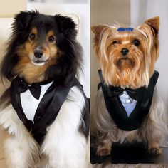 Wedding Tuxedo for Dogs, adorable.  For those who don't have human friends getting married.
