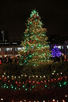 Roswell Park Hospital in Buffalo New York, so many in Western New York who have suffered with cancer have gone here and are going here. The Roswell ChristmasTree of Hope is now lit for the season -- a season of celebration, joy and hope. — at Roswell Park Cancer Institute.