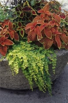 Welcome to the World of Container Gardening - University of Illinois Extension yard-garden