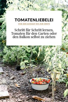 Wann Kräutergarten Anlegen Aussaatkalender Anpflanzen Kräuter ... Gemusegarten Anlegen Tipps Tricks Ernte