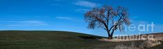 Springtime in the Palouse.. WA State images seen on SEImagesonline, a Fine Art America website