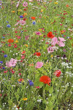 www.rustica.fr - 7 gestes pour avoir une belle pelouse