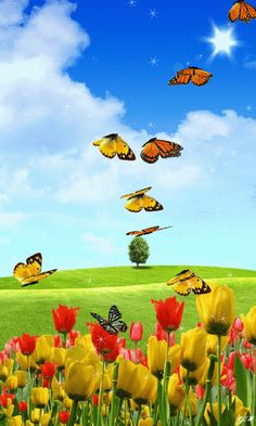 GIF'S : Happiness is having you for my Son . Sending hugs to you in Heaven. Butterflies Flying, Beautiful Butterflies, Beautiful Birds, Beautiful Gif, Beautiful Pictures, Gif Bonito, Beau Gif, Butterfly Gif, Flowers Gif