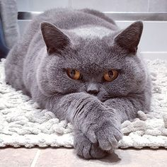 with crossed paws