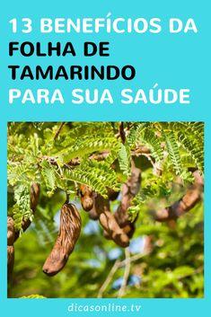 Folha de Tamarindo - Benefícios Tamarind Fruit, Spirulina, Medicinal Plants, Fruit Trees, Natural Medicine, Science And Nature, Aloe Vera, Green Beans, Diets