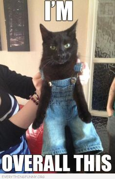 funny caption cat in overalls i am overall all this