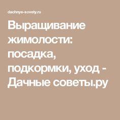 Выращивание жимолости: посадка, подкормки, уход - Дачные советы.ру