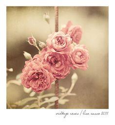 vintage fine art roses pink sepia