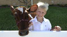 Boy and his Cow photo idea.