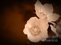 June Blossoms in Sepia Photograph by Chalet Roome-Rigdon