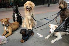 Cinco correas para perros hechas en casa, y baratas | EROSKI CONSUMER. La correa del can puede fabricarse en casa de un modo económico e, incluso, gratis