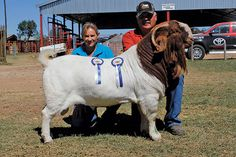 Senior and Grand Champion Boer Goat Ram
