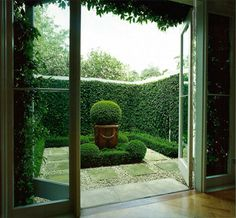 boxwoods surround another boxwood elevated in a pot
