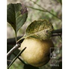 Obrazy/reprodukcje - DecoWall