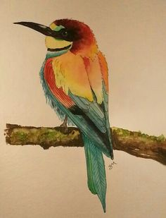 European Bee-Eater   watercolor
