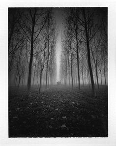 Suramnya ni hutan