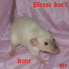 Image about aesthetic in random shit by brie on We Heart It Animals And Pets, Funny Animals, Cute Animals, Rat Girl, Gemini, Cute Rats, Creepy Cute, Rodents, Reaction Pictures