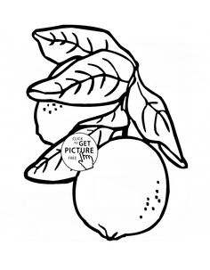 lemons with leaves fruit coloring page for kids fruits coloring pages printables free