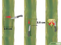 Image titled Graft a Tree Step 3 - Moja strona Grafting Fruit Trees, Grafting Plants, Veg Garden, Garden Trees, Garden Plants, Trees And Shrubs, Trees To Plant, Avocado Tree, Permaculture Design