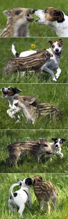 perro conviviendo con otra especie
