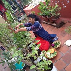 """Meet Prathima Adiga from Bangalore India  """"I have been working as a freelance cookery expert for past 18 years. My husband is a civil engineer and he loves to see green in our terrace. I have been passionate about gardening because I grew up seeing my father tend to his roses and hibiscus plants and his love for gardening was passed on to me.  I happened to attend a gardening workshop event OFYT (Oota From Your Thota) seven years ago and I was intrigued. There I saw Viswanath Bangalore…"""