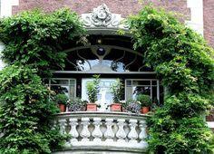 Des plantes grimpantes pour balcon et terrasses - des idées et des solutions en fleurs qui vont embellir vos coins de repos en pleine air sur le balcon!