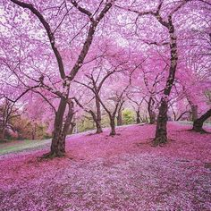Central Park, New York City... ............... . Spring is a whisper  on the earth's lips.
