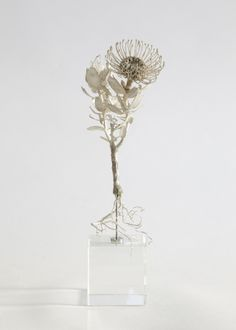 Bronze botanical specimen from Cape Town's Table Mountain by artist, surfer dude and botanist Nic Bladen.  From HAND/EYE's 09/So...
