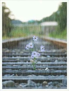 Flowers in the rain...