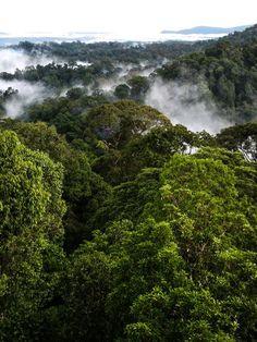 Regenwald des Ulu Temburong National Park (Brunei): Werden Schutzgebiete...