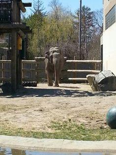 Buttonwood Zoo 2013