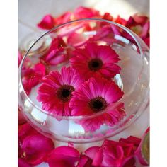 Floating Gerbera Daisys yes cos those will be my wedding flowers Wedding Centerpieces, Wedding Table, Our Wedding, Dream Wedding, Wedding Decorations, Graduation Centerpiece, Wedding Ideas, Candle Centerpieces, Centrepieces